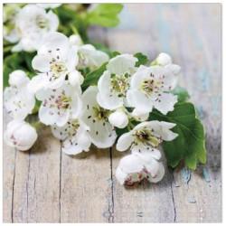 Ruokaservetti kukka valkoinen