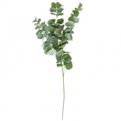Eucalyptus oksa