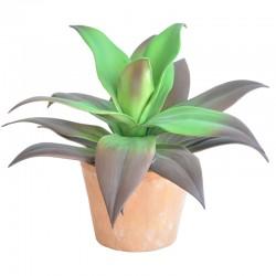 Agave kasvi ruukku
