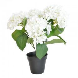 Hortensia ruukku valkoinen