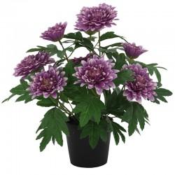 Krysanteemi ruukku violetti