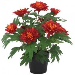 Krysanteemi ruukku terra