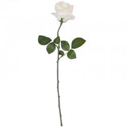 Ruusu valkoinen